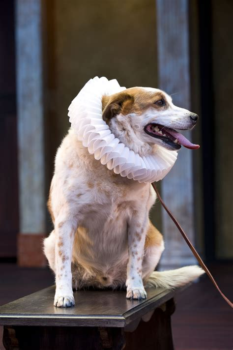 verona dogs calling all dogs for shakespeare auditions st george news