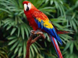 an essay article on the parrot