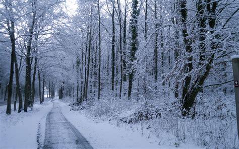 Pflanzen Und Bäume 2275 by Winter B 228 Ume Pflanzen Stra 223 E Schnee Hintergrundbilder