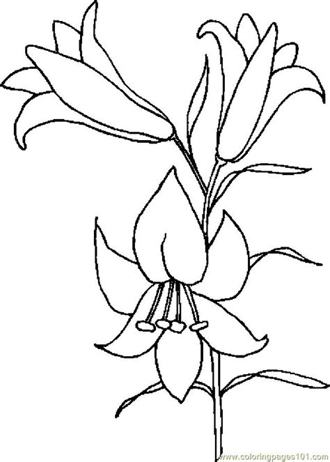 coloring pictures of easter lilies flower coloring pages