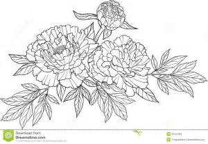 White Rose Flowers - peony outline clipart china cps