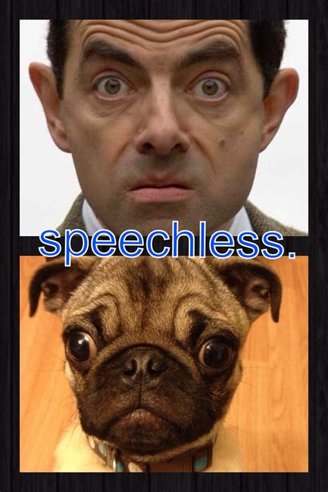 pug beans 141 best images about mr bean on pictures of new and bullock