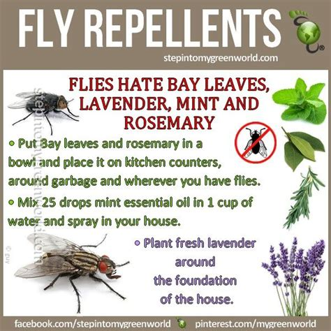 home remedy for flies for the home