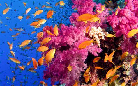 underwater colorful coral reef wallpapers coral reef desktop wallpaper coral reef desktop