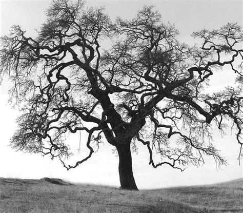 Garden Zone Map - oak tree winter morgan territory livermore ca flickr photo sharing