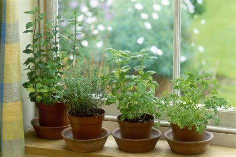 overwinter garden herbs indoors