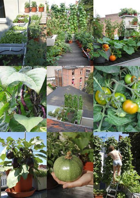 vegetable roof garden our roof vegetable garden antwerp belgium home