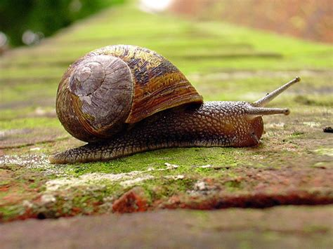 Ashley White Mollusca Gastropoda Unid Snail Flickr Photo Sharing