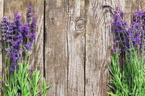 wood lavender flowers background stock image image of