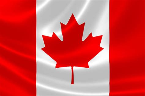 maple leaf pictures images  stock  istock