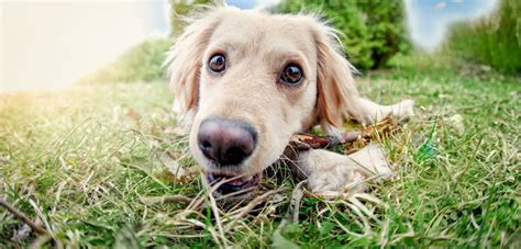 when do puppies stop biting and chewing how to stop your puppy from biting and chewing not in the housenot in the