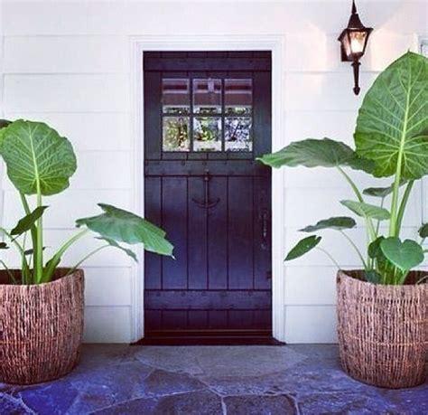 plantas patio interior oscuro plants and dark doors doors my love pinterest