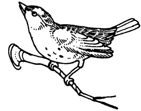 mockingbird coloring pages mockingbird outline