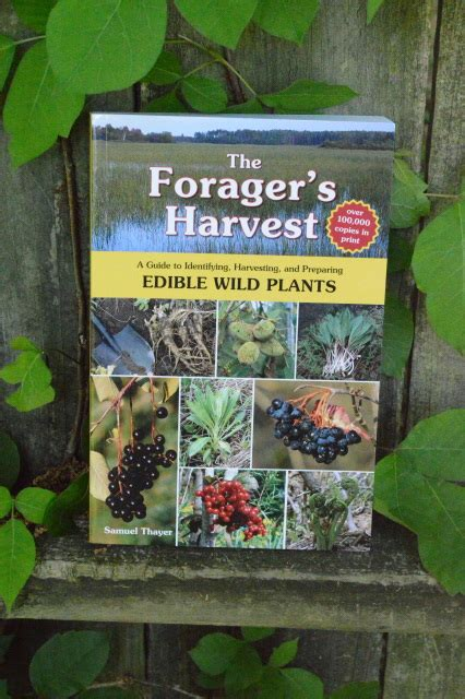 Pdf Foragers Harvest Identifying Harvesting Preparing by Education