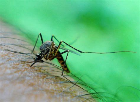 Keep Backyard Mosquitos At Bay Bob Vila Radio Bob Vila Get Rid Mosquitoes Backyard
