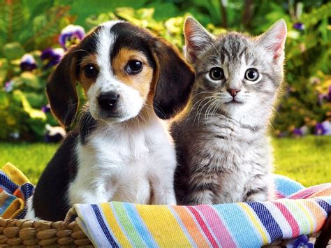 show me pictures of puppies show me pictures of puppies and kittens 4k wallpapers