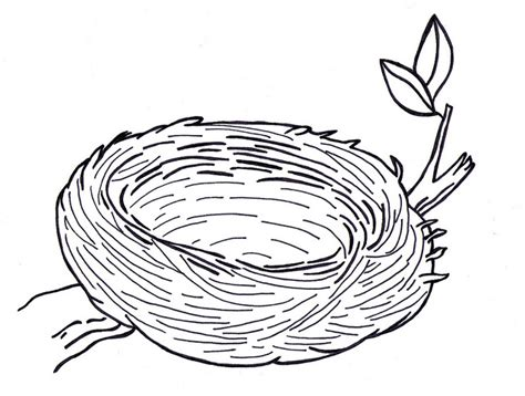 bird nest drawing misc craft pinterest nest