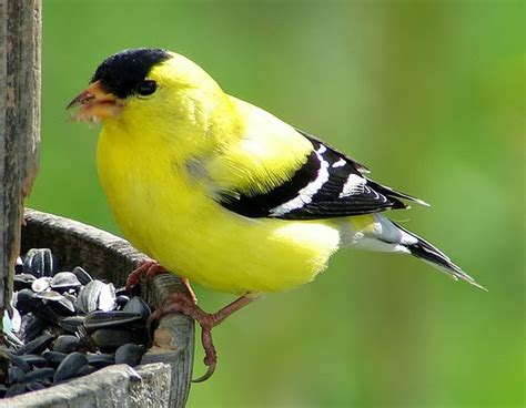 ajumma s pad birds i miss from minnesota basically all