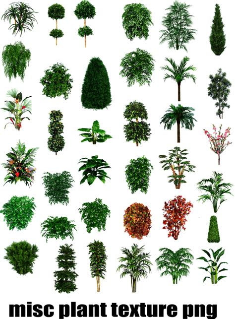 botanical trees tree types 1 landscaping pinterest misc plant tree texture png by dbszabo1 on deviantart