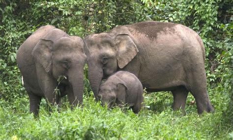Elephant Bigsize Brown elephant family 08 10 2012 species photos wwf