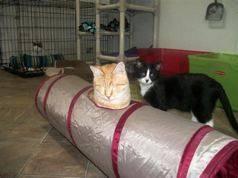 meet the happy kitties of blind cat rescue and sanctuary