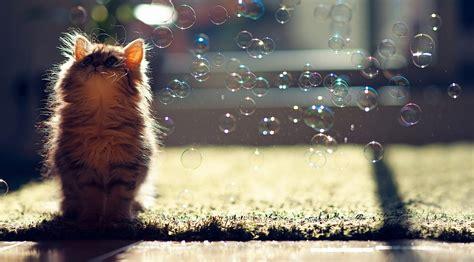 cat wallpaper for desktop kitten hd wallpaper for desktop