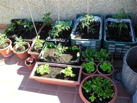 huerto urbano en casa huerto ecol 243 gico en casa qu 233 se necesita para cultivar un