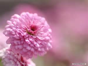 image gallery japanese flowers