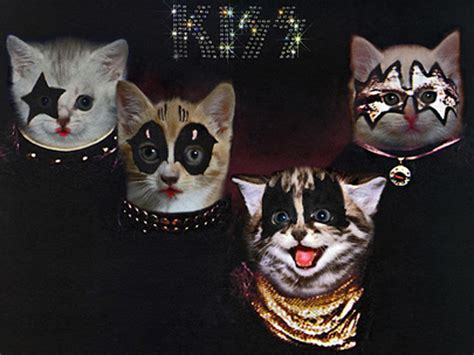 Cat Cover by Kittenmind Nirvana Nevermind The Kitten Covers