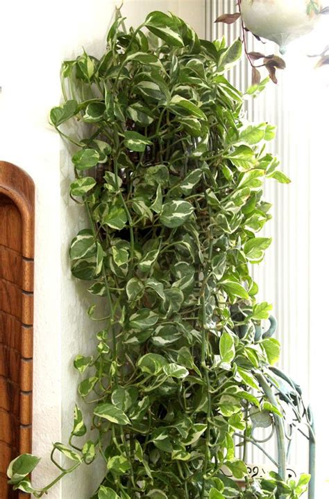 low light hanging plants indoors best 25 air purify plants ideas on pinterest inside