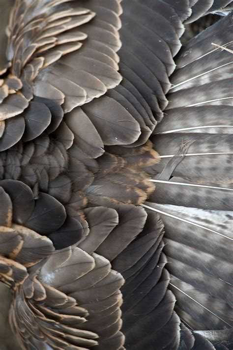 grey nature wallpaper lovely grey brown feathers natural beauty inspiration
