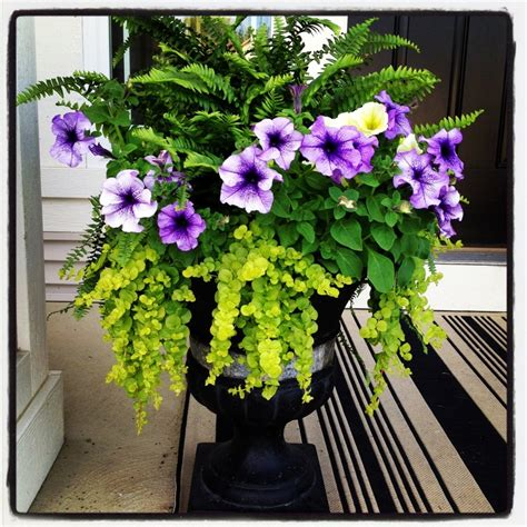 fern and petunia planter june outside