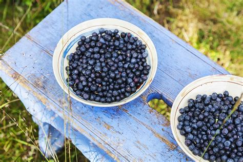 Blueberries Stool by What Makes Blueberries Superfoods Jstor Daily
