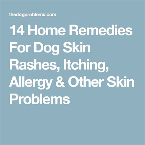 remedies for itchy dogs 25 best ideas about skin allergies on itchy remedies skin