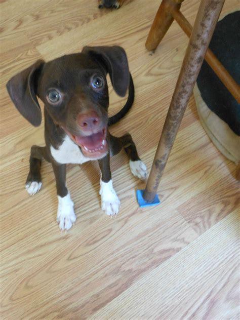 is my puppy my is imgur