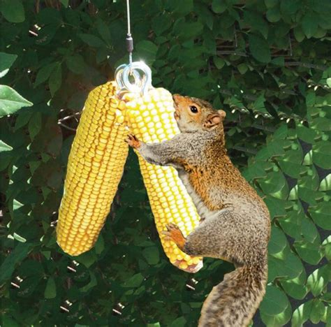 squirrel bungee cord feeder on target in canada