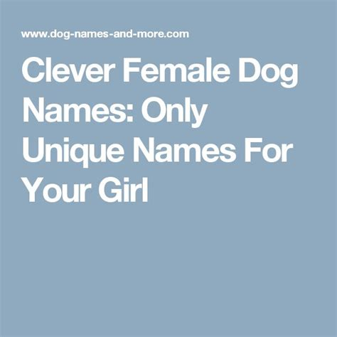 8 Unique Names For Your Pet by Clever Names Only Unique Names For Your