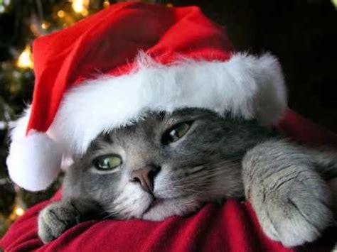 cute christmas kittens christmas kitten cute christmas
