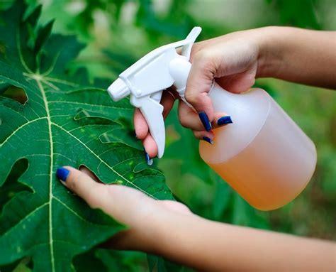 organic garden pest recipe this amazing pesticide recipe is so effective you