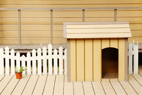 the perfect house dog 7 steps to building the perfect dog house entirelypets blog