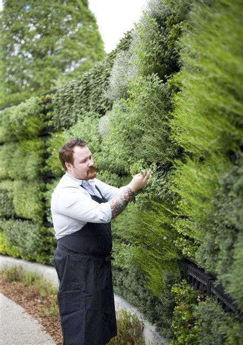 herbs on wall best 25 herb wall ideas on kitchen herbs