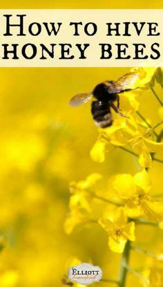 how to raise bees in your backyard homemade finch bird feeders the birds bees and other