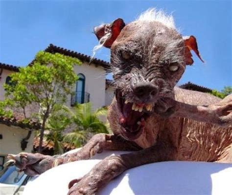 Shoo Anjing cool high quality pix 10 most ugliest dogs in the world
