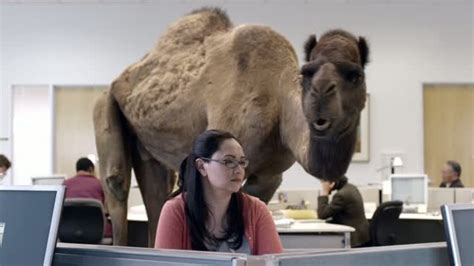 geico hump day camel commercial happier than a youtube 301 moved permanently