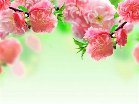Pink Flower Powerpoint Background Background Collection Beautiful Flowers Backgrounds For Powerpoint Flower Ppt