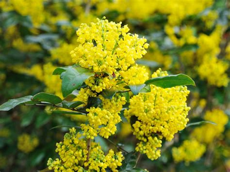 shrubs that flower in winter plants that flower in winter hgtv