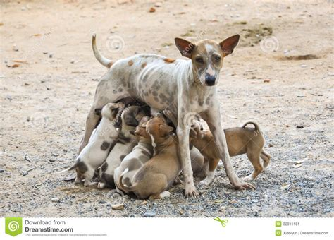 feeding puppies stray feeding puppies with milk stock image image 32811181