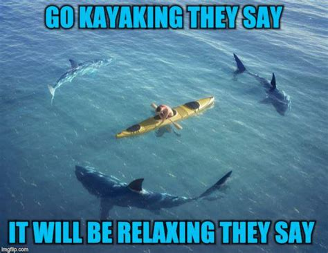 Shark Week Meme - funny shark week memes