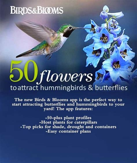 50 flowers to attract hummingbirds and butterflies do