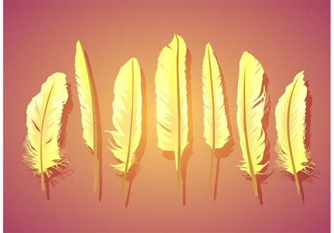 vector feather isolated   vector art stock